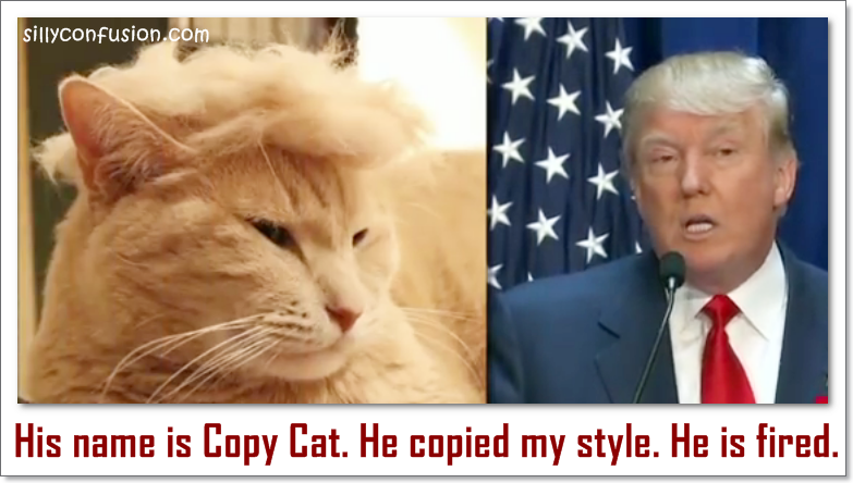 donald trump hair cat lookalike